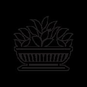 Bilva – The Bilva Fruit Buddhism symbol