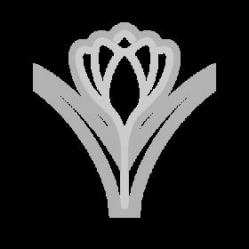 Crocus Flower Symbol