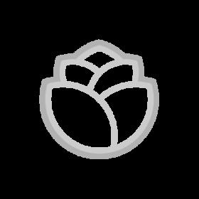 Tulip Flower Symbol